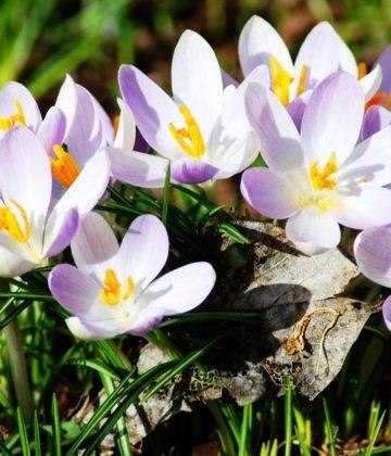 akcii - Весна - теплые месяцы в МВК